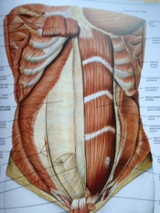 The beautiful anatomy of the abdominal wall