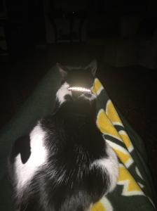 Zoe, my meditation partner.